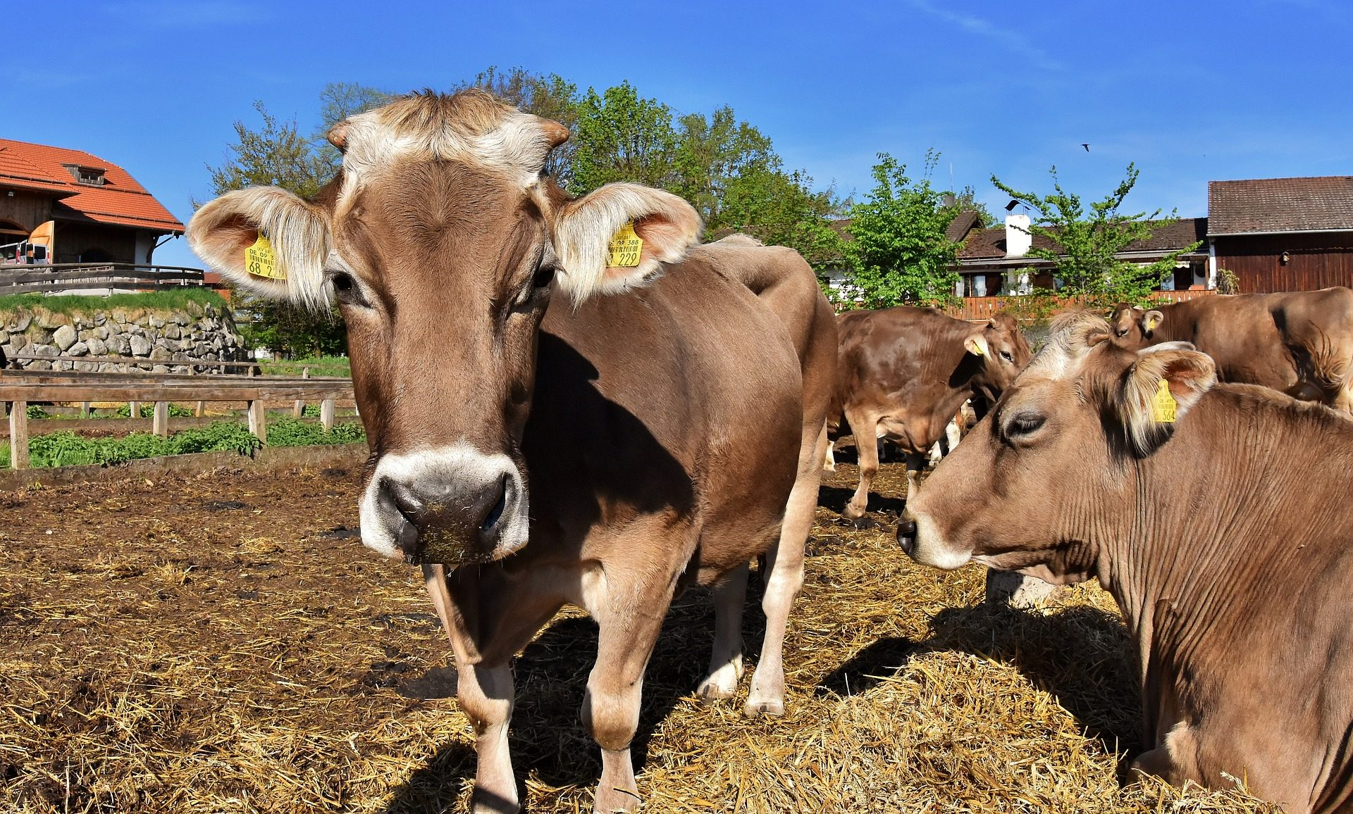Scientist's given $200,000 to study cow farts… Seriously