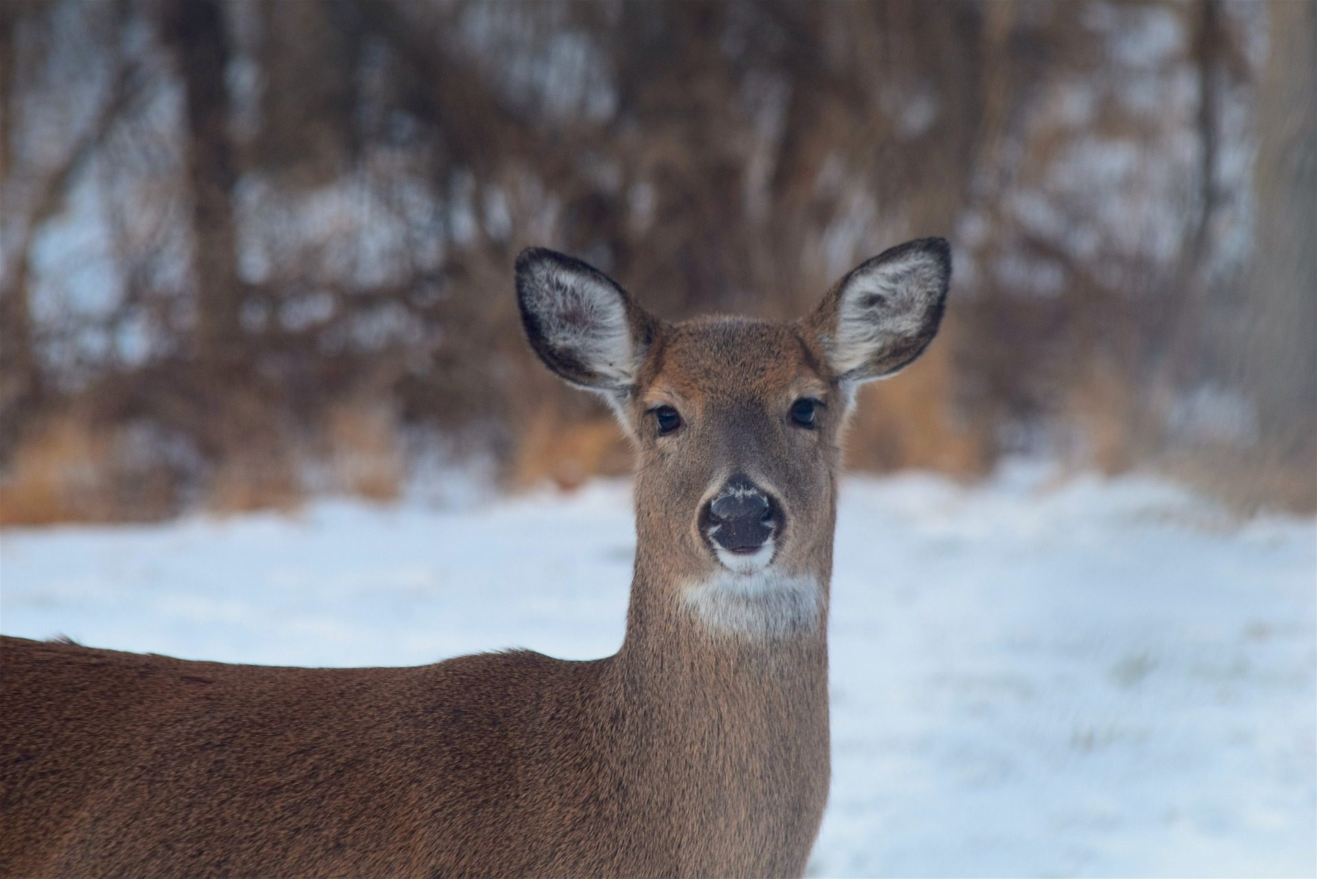 PA Father and Son Risk Lives Saving Deer [watch]