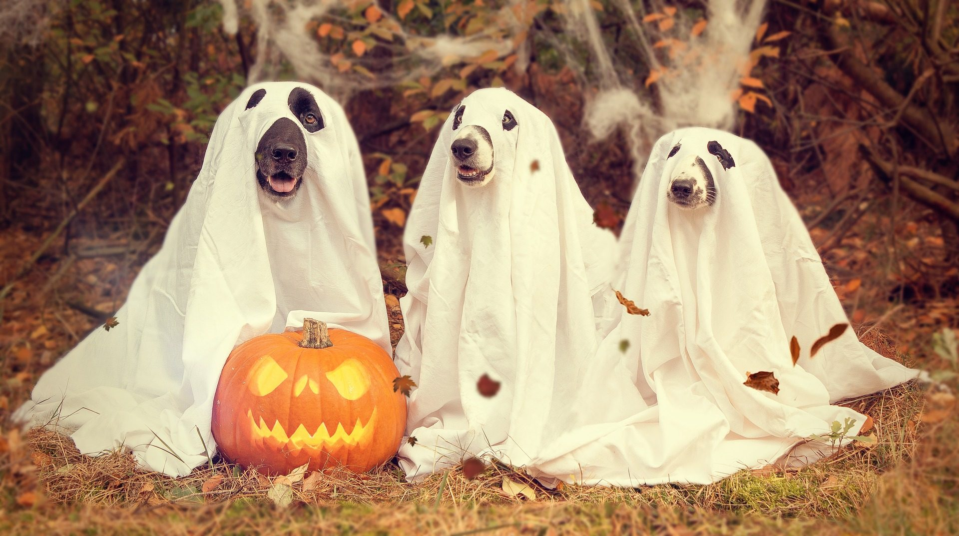 Half of americans believe in ghosts, and more believe in some sort of paranormals [+more]