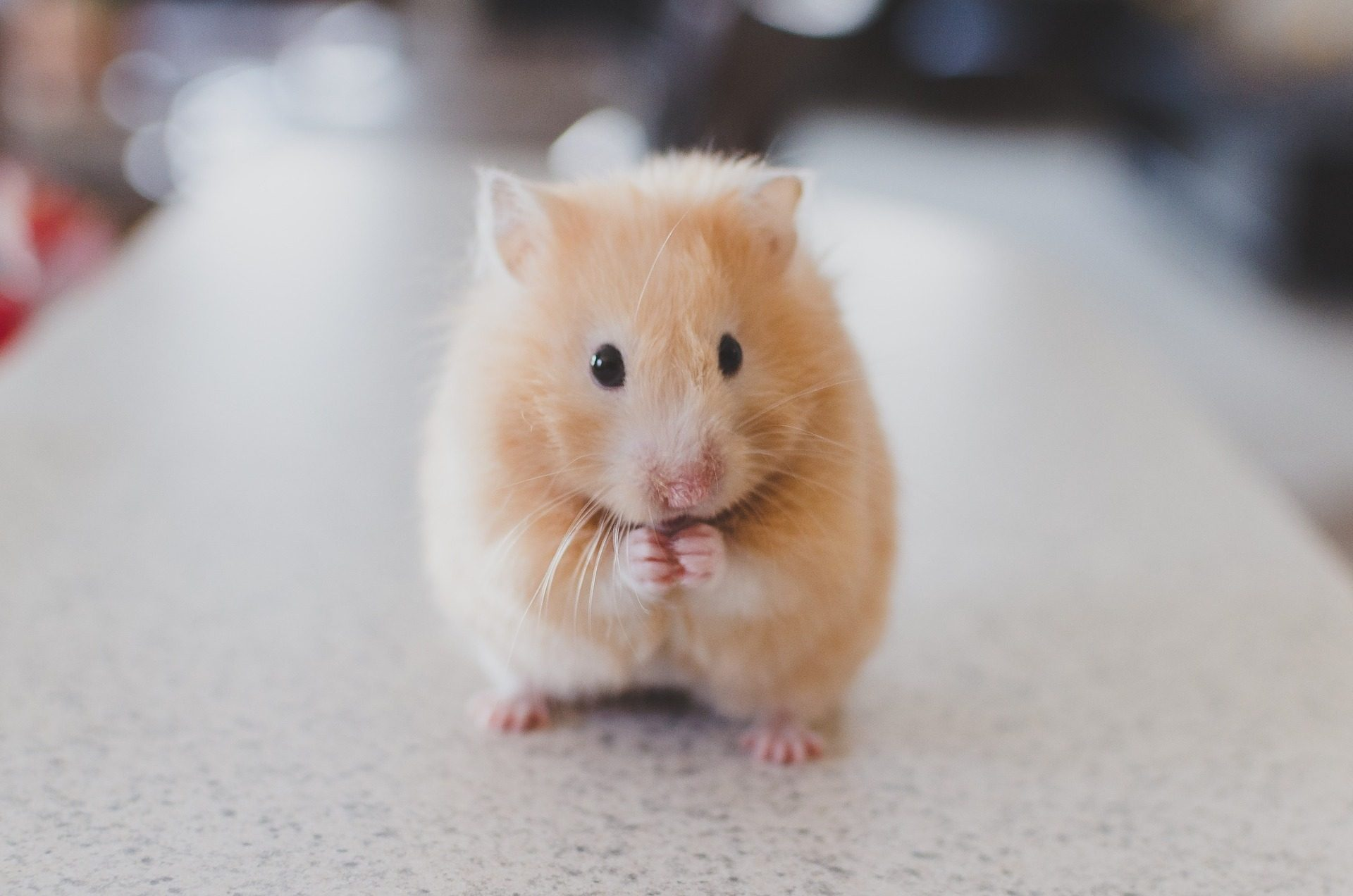 PA student forced to flush hamster down toilet [watch]