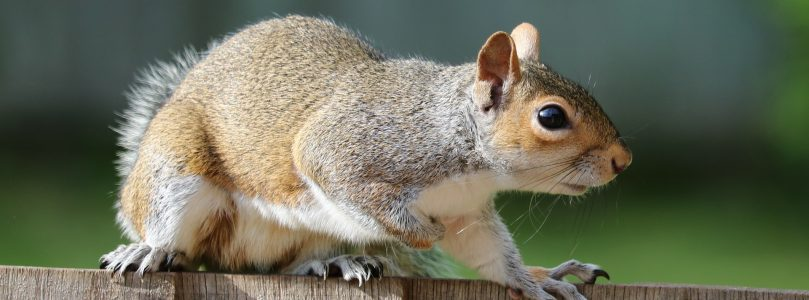 Squirrel Causes Factory Fire and Community Power Outage