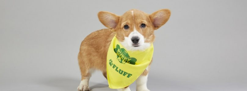 The 2019 Puppy Bowl Lineup is Here!