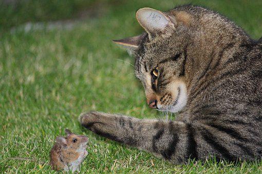 Take THAT, Sylvester!!!