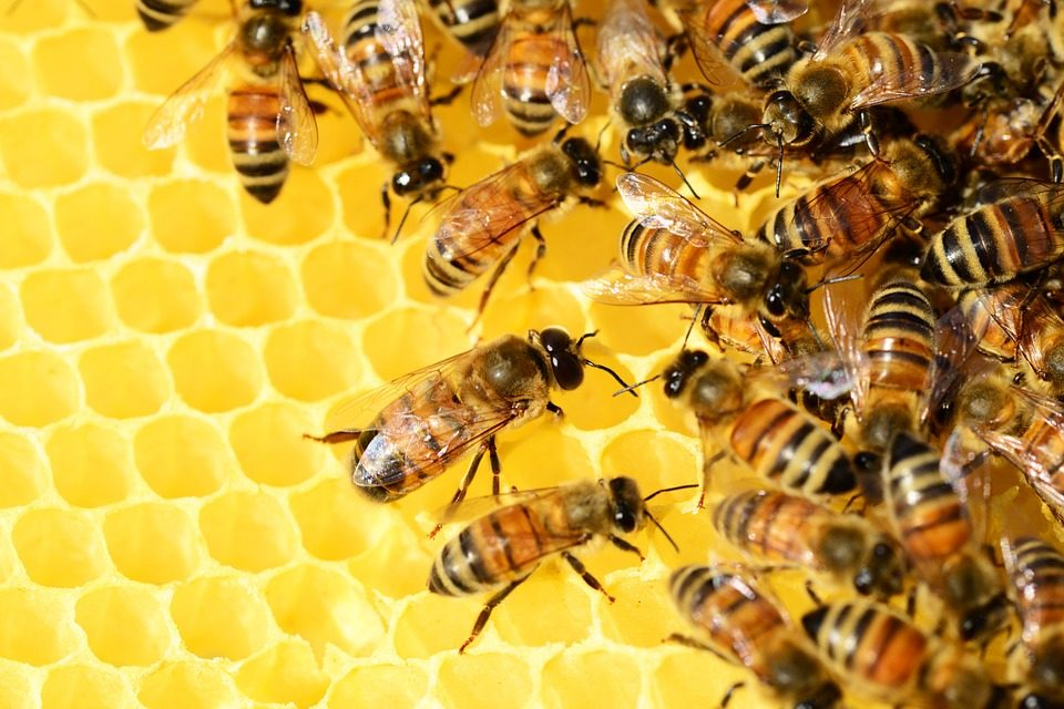 Hey! Hey! You! You! I don't like your bee-friend. [WATCH]