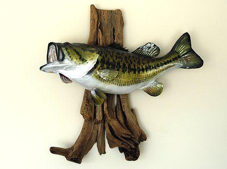 Put Down That Fish!!!!!