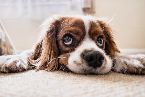 Sweet Puppy Dreams!